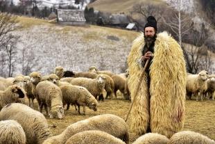 トランシルバニアの羊飼い