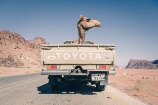 ラクダのドライブ