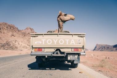 【Photo of the Day】ラクダのドライブ