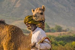 ラクダの愛