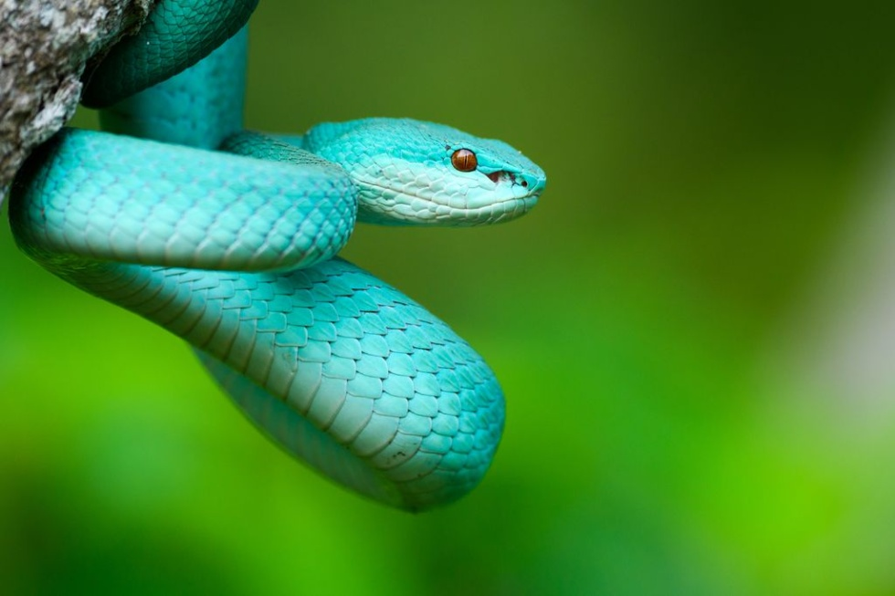鮮やかなブルーのヘビ