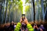 竹林の道でスマホ撮影