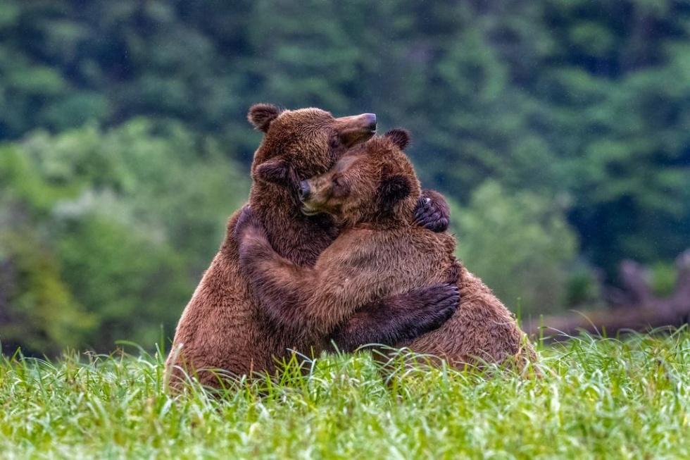 クマのハグ