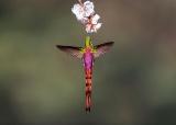 虹色に輝く羽