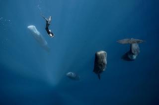 マッコウクジラの「立ち寝」