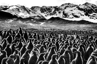 ペンギンたちが大集合
