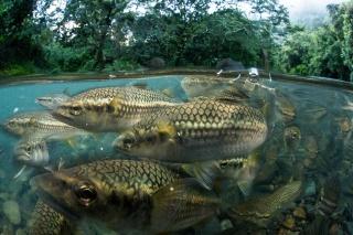 知ってほしい、こんなに豊かな淡水の生き物たち 写真16点