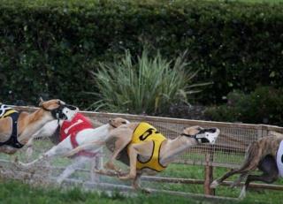 米国伝統の犬レースが消滅へ、背景にドーピング、不正な殺処分の歴史