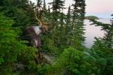 北米ノースウッズ、森と湖の世界に野生の輝きを求めて、写真12点