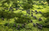 紛争で荒れた国立公園にゾウが帰ってきた、コンゴ 写真8点
