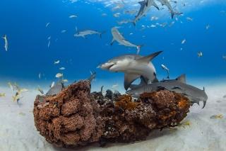 孤高の捕食者ではなかったサメ 数年にわたる友情を育む事例も