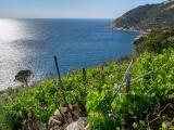 ブドウを海に沈める、イタリアで古代のワインづくりを復興