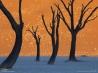 ナミブの砂丘