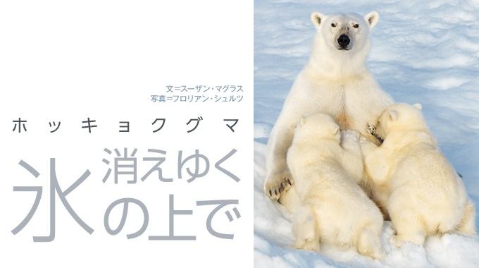 地球温暖化の影響で海氷が減少する北極海。氷の上で狩りをするホッキョクグマは生き残れるのだろうか。