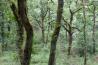 コケや着生植物に覆われて、豊かに葉を茂らせるオメム渓谷の森。ペネダ・ジェレス国立公園には、荒々しい岩山から緑豊かな渓谷まで、さまざまな自然がモザイクのように混在している。