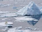 氷に乗って漂うホッキョクグマ