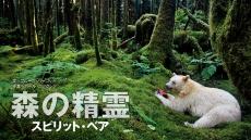 森の精霊 スピリット・ベア