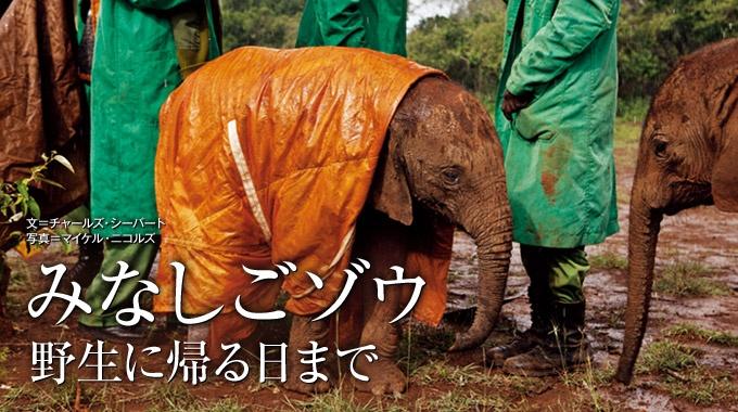 ケニアには、人間によって母親を殺されたみなしごゾウを助け出し、育てる施設がある。保護された子ゾウたちは、献身的な飼育員によって傷を癒やされ、その愛情を胸に、再び野生へと帰っていく。
