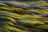 冬には、ロワー・セント・リージス湖の岸辺の植物が吹きすさぶ風を受けてしなる。
