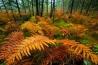 シダの茂みも、同じように色を変える。