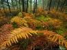 黄葉するシダの茂み
