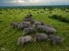 移動するゾウの群れ