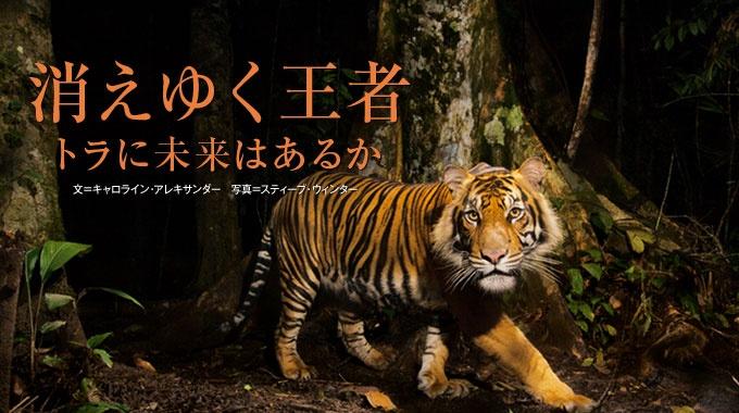 大型ネコ科動物の中で最も大きな体格を誇るトラも、野生の生息数は世界で約4000頭と、絶滅の瀬戸際にある。今、人間がなすべきこととは何か。アジアの保護区をめぐりながら、保護活動の実態を考察する。