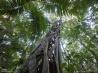 フレーザー島の森(オーストラリア)