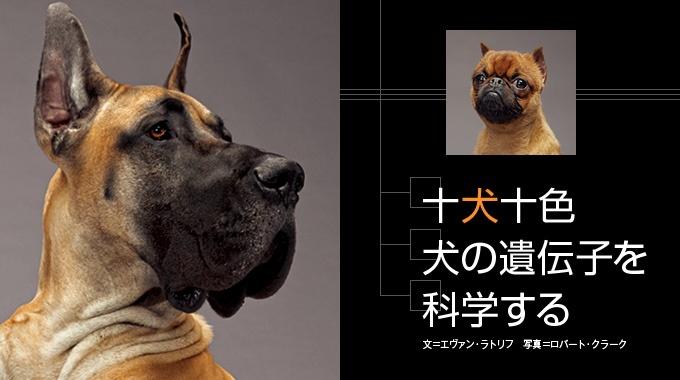 人類最良の友として多様な進化を遂げた犬。その遺伝子が、人間の遺伝病の解明に役立つかもしれない。
