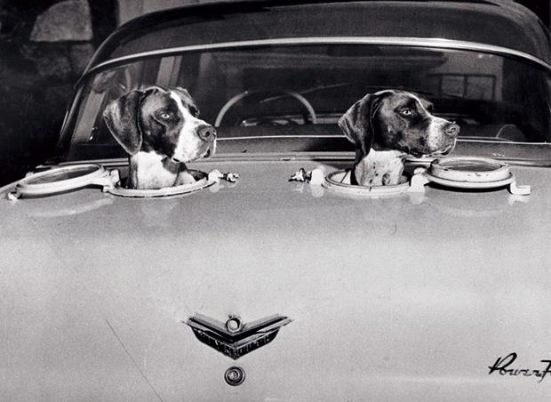 ドライブを楽しむ犬たち