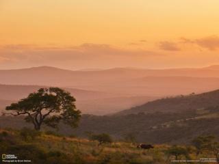 赤く染まる丘陵を歩むサイ (南アフリカ共和国)