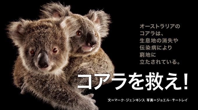 ユーカリの森が消え、伝染病も流行。オーストラリアのコアラの窮状と、保護に奔走する人々を取材した。