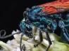花粉を食べるオオベッコウバチ