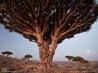 摩訶不思議なソコトラ島 6 リュウケツジュが生えるディクサム高原