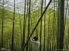 竹を切る男性(中国浙江省)