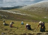 チベット高原で冬虫夏草を探す人々