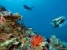 海山の斜面を調べるダイバー (インドネシア ラジャ・アンパット諸島)