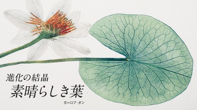 身の回りにある多彩な葉っぱたち。どれも長い歳月をかけて巧みに進化してきた芸術作品だ。