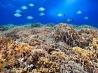 中米 メソアメリカン・リーフの生きものたち 7 サンゴ礁を泳ぐ魚の群れ