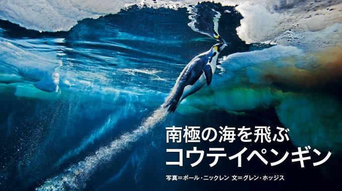 """水中では飛ぶように自在に泳ぎ回るペンギン。高速で泳げる秘密は、その羽毛と""""泡""""にあるようだ。"""