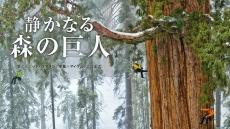 静かなる森の巨人