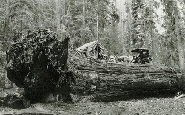 巨木の上でピクニック