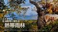 石油開発に揺れる熱帯雨林