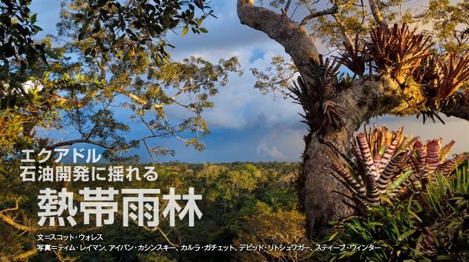 世界屈指の生物多様性を誇るエクアドルのヤスニ国立公園。その原生林で石油開発が着々と進んでいる。