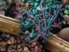 食物の消化や栄養の吸収を助ける腸内細菌