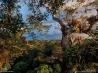 動植物の宝庫 (エクアドル・ヤスニ国立公園)