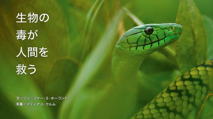 ヘビやサソリなどがもつ強力な毒から、人間の病気を治療する新薬を作りだす研究が進んでいる。