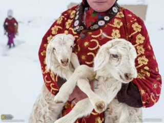厳しい冬を過ごす子羊たち (アフガニスタン・ワハーン回廊)