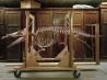 初期のクジラ、マイアケトゥスの骨格