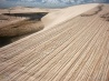 風が刻みつけた砂丘の細い筋(ブラジル)